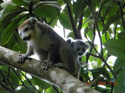 Couronnés, Madagascar, Domaine Le Fontenay, Joffreville